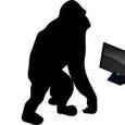 Orangutan Capital